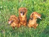 Cassia, Karina a Perka