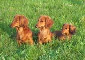 Karina, Cassia a Perka
